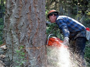 What Chainsaw Do Professional Loggers Use